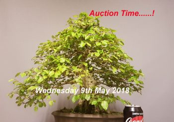 Auction Time Again ……..!